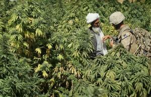 Afghanistan Kush